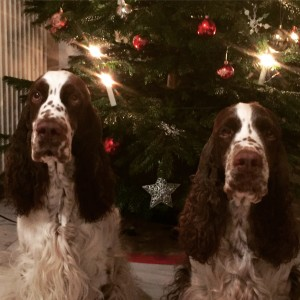 Jultider