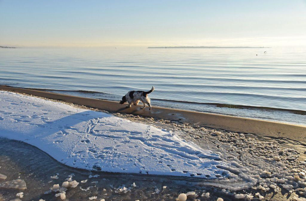Vintersol och havet